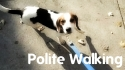 Dog Training - Polite Leash